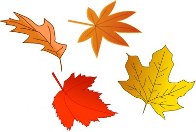 Fall Into the Season: Fun and Creative Things to do During Fall